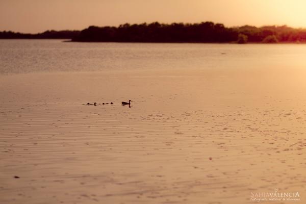 Fotografia Infantil en el Mar Mérida Yucatan por Sahia Valencia Fotografía